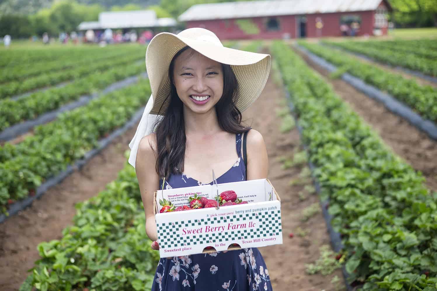 Strawberry Picking At Sweet Berry Farm - A Taste of Koko