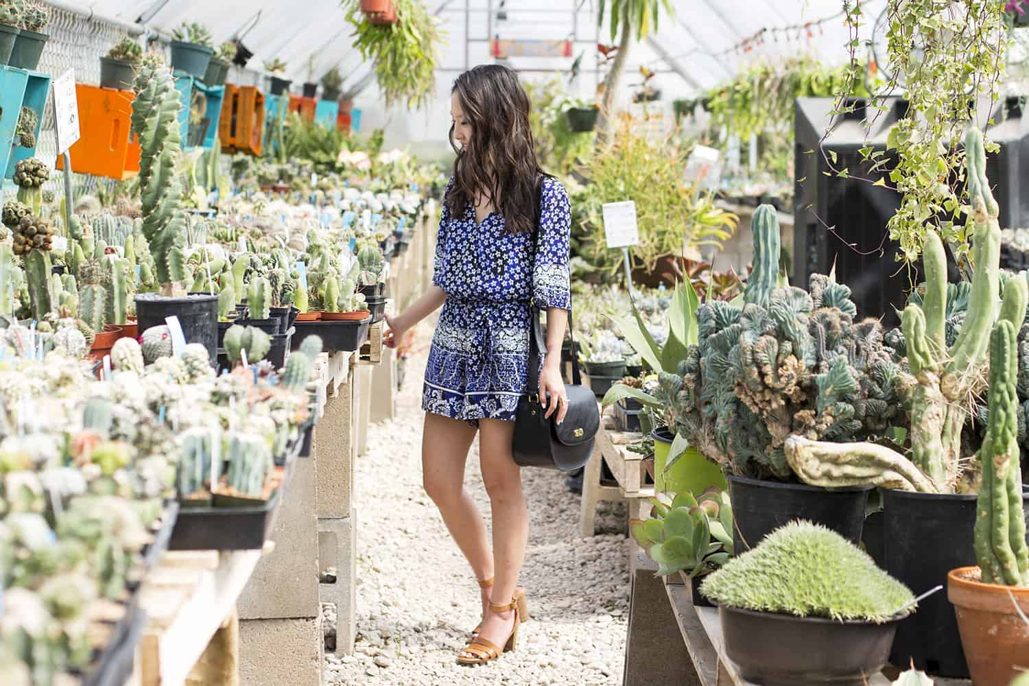Where To Succulents In Austin