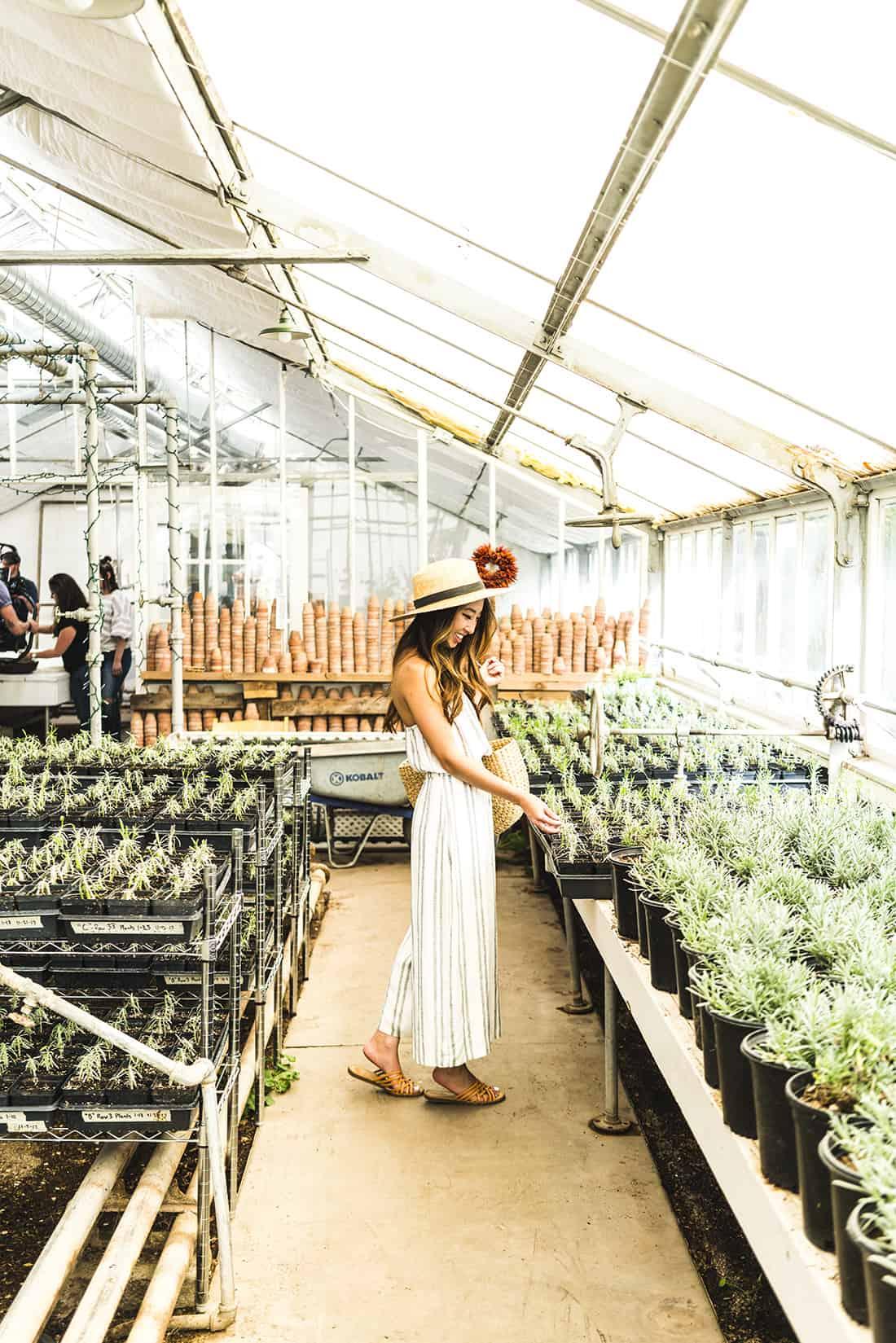 Los Poblanos Greenhouse