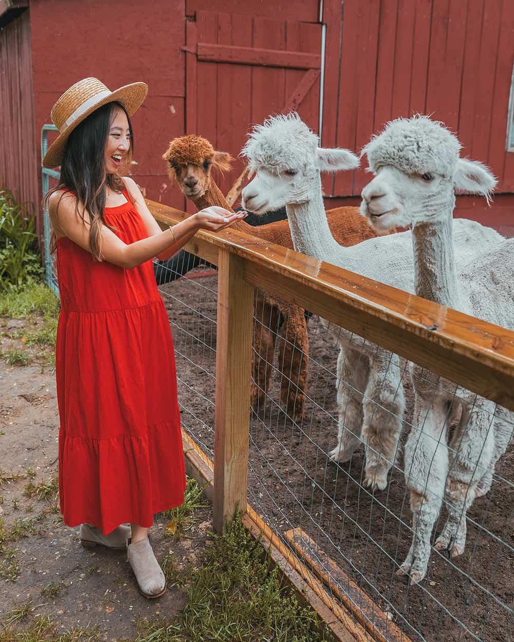 Crystal Lake Alpaca Farm & Boutique in Frankfort, Michigan